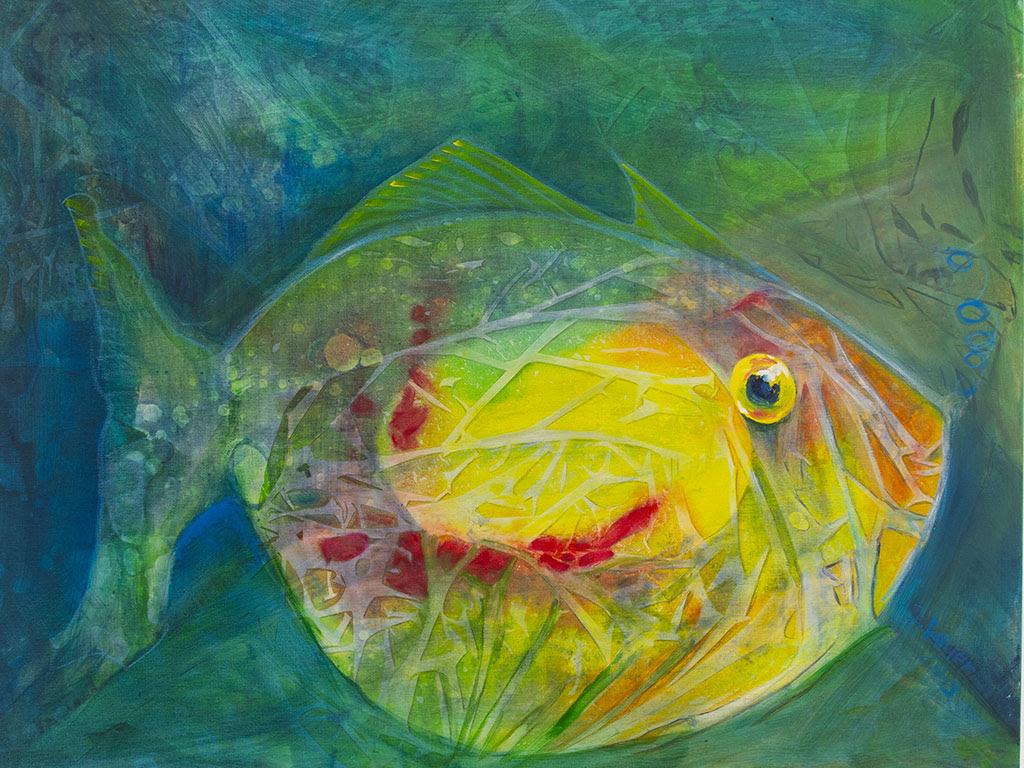 Bild Fisch auf Lauer